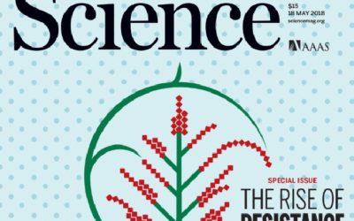 O galego Álvaro Valiño ilustra de novo a portada de 'Science'